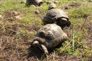 Kaplumbagalar