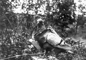 wwi_animals_05